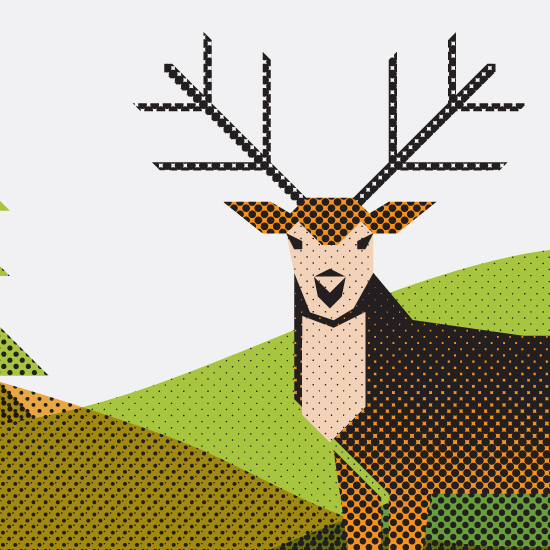 deer_featured
